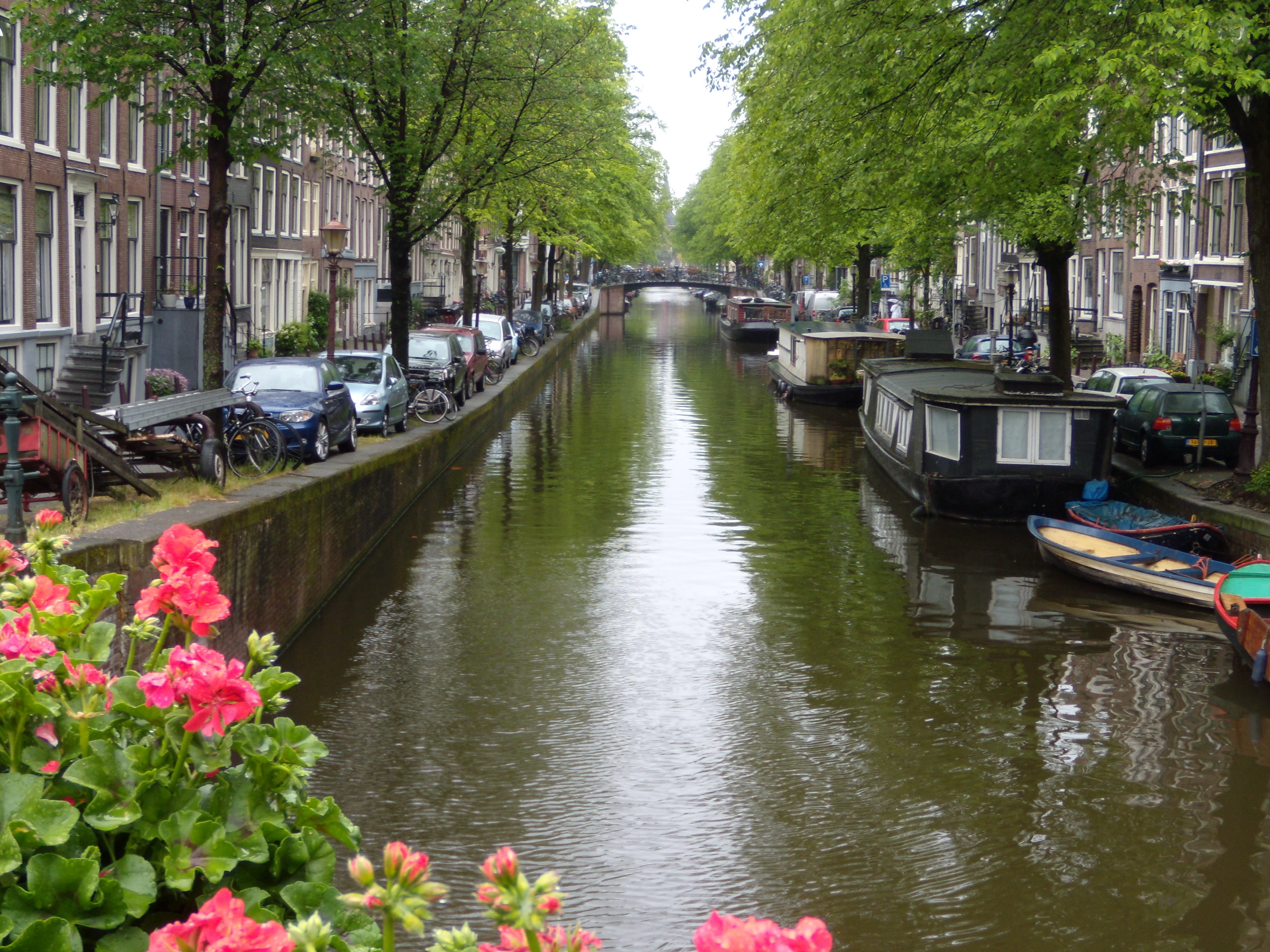 the fault in our stars� amsterdam